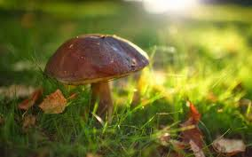 wallpaper 3d mushroom mushroom wallpaper wallpapers browse