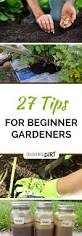 27 tips for beginner vegetable gardeners to grow more food