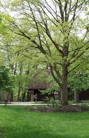 Lakeview Lawn And Landscape by Property Handbook Section 4 Lots Lawns And Landscapes Policy
