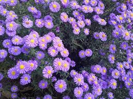 fiori viola giardino fiori viola 盞 foto gratis su pixabay