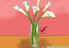 How To Make Roses Live Longer In A Vase 3 Ways To Keep Cut Calla Lilies Fresh Wikihow