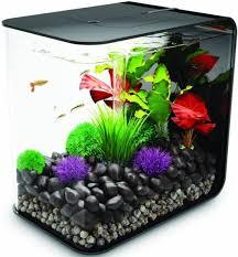 Betta Fish Decorations 72 Best Fish Images On Pinterest Aquarium Ideas Aquarium Fish