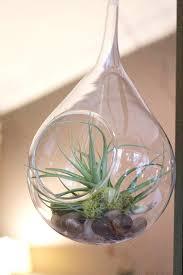 hanging air plant terrarium in duluth mn saffron u0026 grey couture