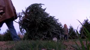 picking the perfect tree to get ready for christmas wffg fm