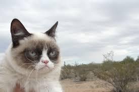 Grumpy Face Meme - tardar sauce the grumpy cat high res blog