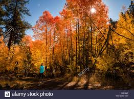 trail running beautiful fall colors lake tahoe