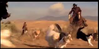 Herding Cats Meme - cowboy herding cats commercial may just be the best we ve seen