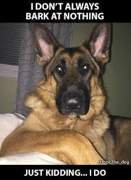 Dog Barking Meme - pin by char neigum on dogs pinterest german shepherds german