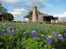 now is the time to plant wildflowers san antonio express news