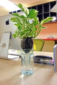 self watering indoor planters how to grow an amazing indoor garden with self watering wine