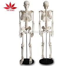 mini plastic skeletons mini plastic skeletons suppliers and