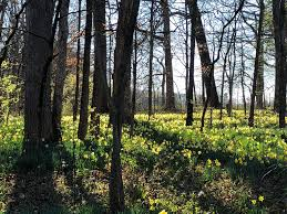 North Carolina Forest images Spring bursting forth in a north carolina forest oc 1080 x 720 jpg