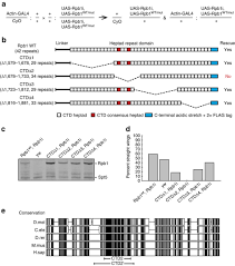 Blue And White Flag With Red C Phosphorylation Induces Sequence Specific Conformational Switches