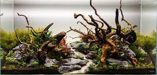 Aquascape From This To This Aquascape Progression Scape 4 Added Page 3