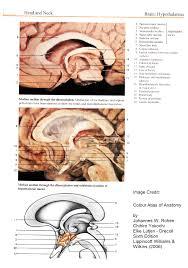 neuroplasticity and epilepsy the effect of pathological activity
