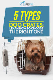 types of dogs 5 types of dog crates and how to choose a perfect pet crate for