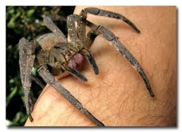 the 6 real and terrifying spider superpowers spider and animal