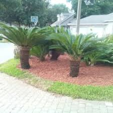 ls that look like trees aaa palm trees plus 25 photos tree services destin fl phone