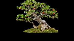 japanese of growing a miniature tree