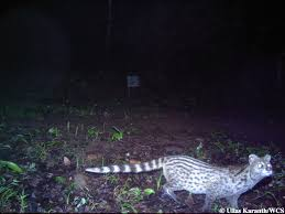 top photos 20 years camera trapping india u0027s elusive carnivores
