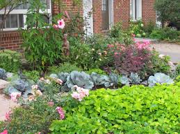 plants native to ontario maria u0027s lawn be gone front yard in ontario fine gardening