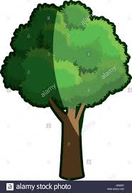 beech tree trunk stock vector images alamy