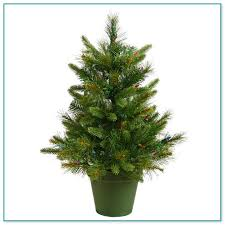 small potted pine trees