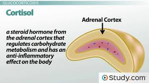 hormones definition function u0026 intro to the endocrine system
