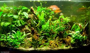 Aquascape Pond Products Aquarium Aquascape Designs Aquascape Pond Aquascape Inc