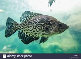 bassproshop black friday bass pro shops stock photos u0026 bass pro shops stock images alamy