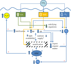 Nitrogen Philosophical Transactions Of The Royal Society B