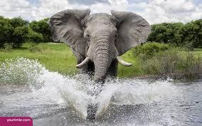 photos elephant facts for kids 2015 wildlife wallpaper free photos