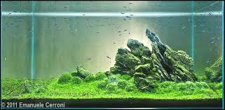 amano aquascape iwagumi aquascape inspirational amano aquascape gallery