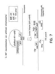 patent us7521240 chromosome based platforms google patents