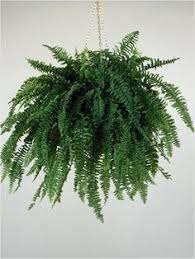 i am for sure not a houseplant but i really want this one