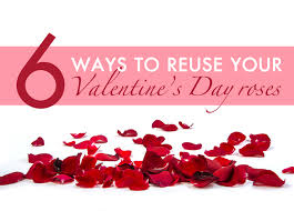 valentines day roses 6 ways to reuse your s day roses inhabitat green