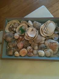 Natural Finds Sea Shells Sea Glass And Driftwood Natural Home