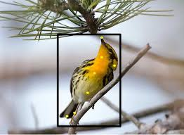 this new program identifies birds with just a photo the