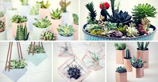 diy succulent 29 diy succulent planter ideas creative ways to display succulents
