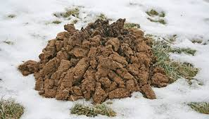 How To Get Rid Of Moles In The Backyard by The Best Ways To Get Rid Of Moles In My Lawn Garden Guides
