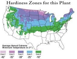 Canadian Garden Zones - black hills spruce transplants picea glauca chief river nursery