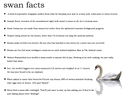 important facts about swans facts pinterest swans