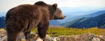 Alaska wild animals images Home wild alaska live pbs jpg