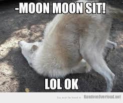 Wolf Meme Generator - deluxe wolf meme generator oh moon moon jokes never ending threads