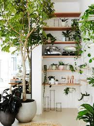 stunning best indoor tree gallery interior design ideas