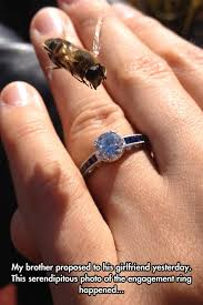 cool engagement rings images This bee has a thing for engagement rings the meta picture jpg