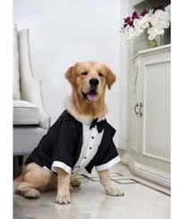 men u0027s fashion happy shappy india u0027s best wedding ideas