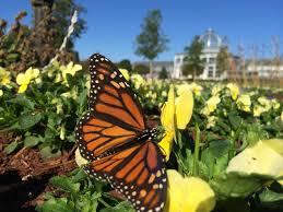 butterfly garden advice from lewis ginter botanical garden