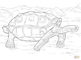 realistic galapagos tortoise coloring page free printable