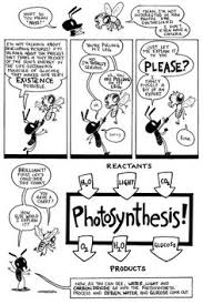 Photosynthesis Coloring Page Photosynthesis Life Science And Photosynthesis Coloring Page